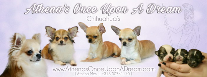 Athena's Once Upon A Dream